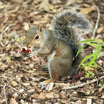 Squirrel pest control in Bromley
